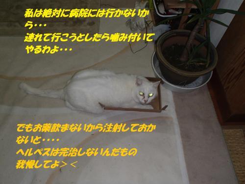 PB182527_convert_20141120134211.jpg