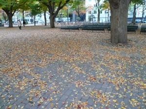 枯葉散る札幌