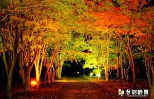 ライトアップ香雪園