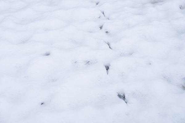雪の興正寺-10