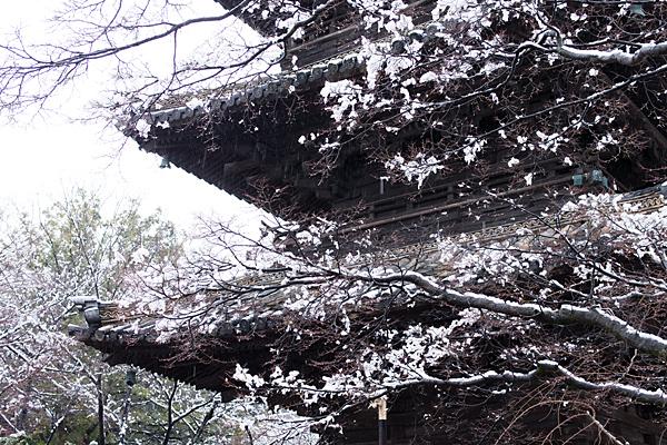 雪の興正寺-7