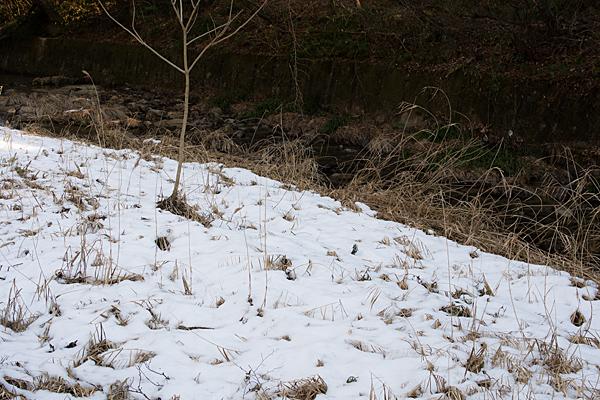 岩屋堂の残雪