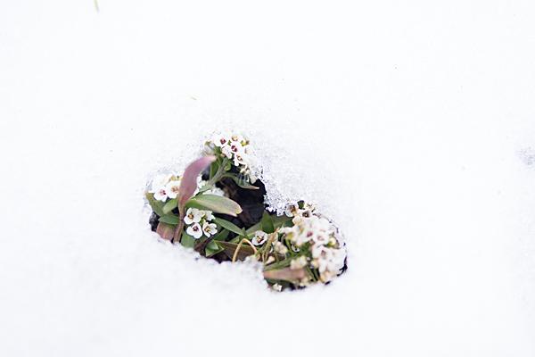 名残の雪-9