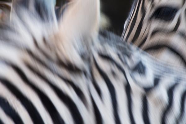 東山動物園-10