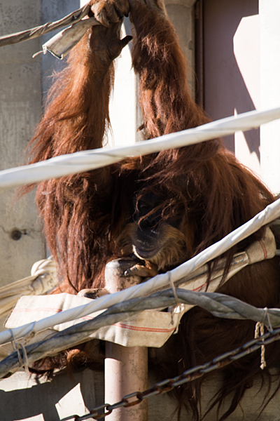 東山動物園-5