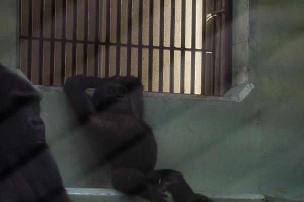 東山動物園-6