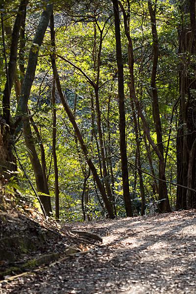 森林公園-14