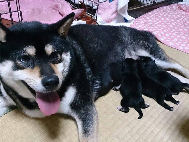 姫ちゃんの赤ちゃん