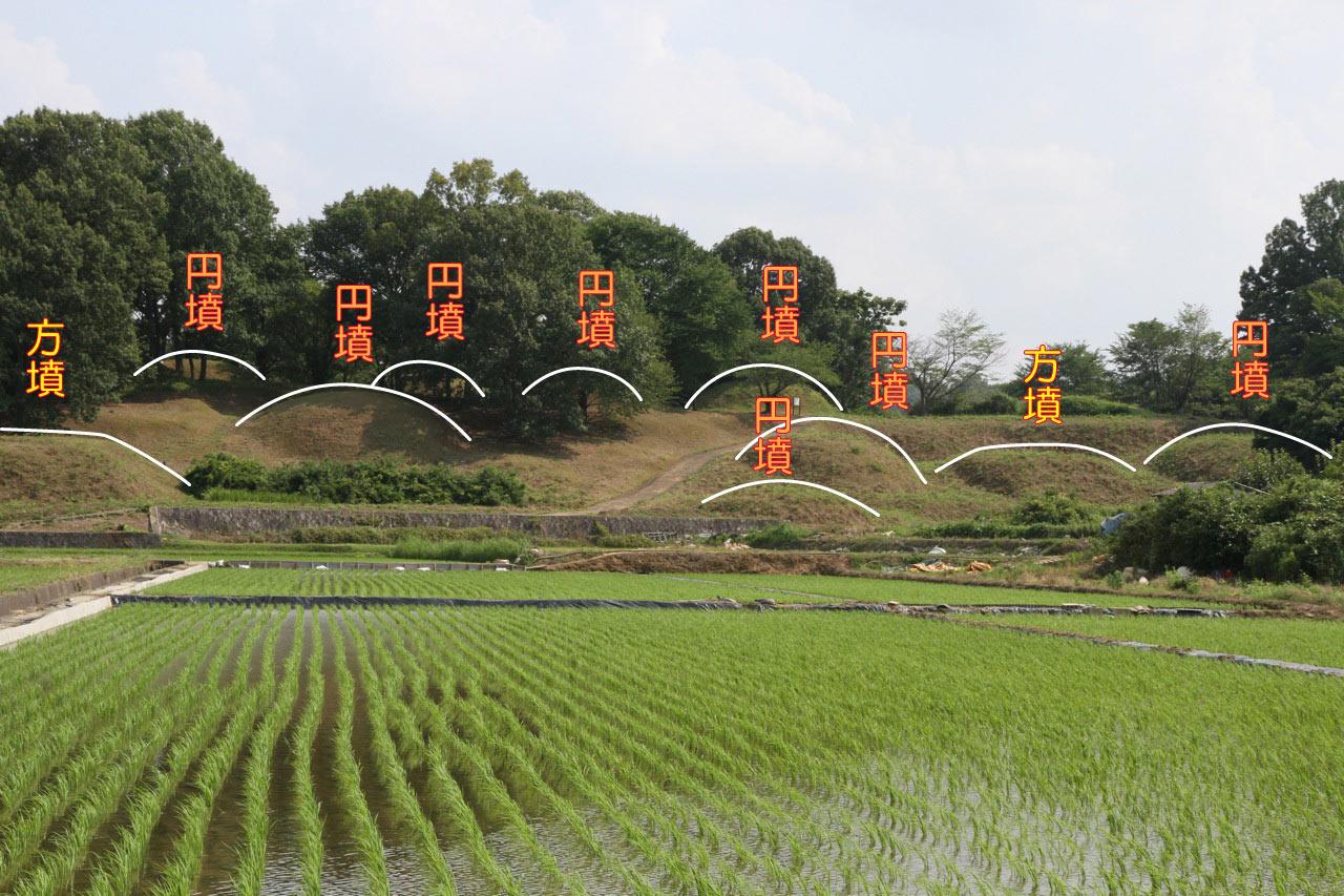 niizawa_8.jpg