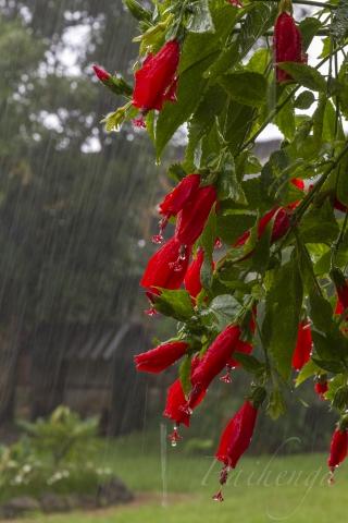 イキナリ篠突く雨