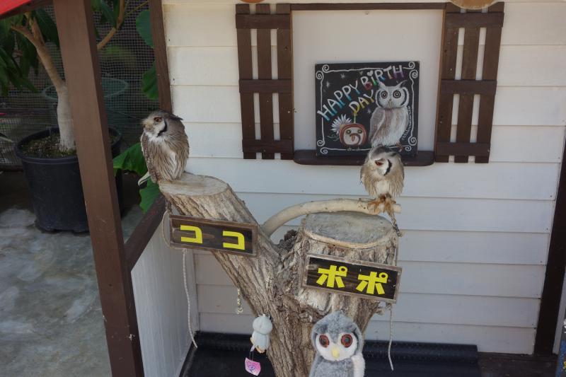 花鳥園10