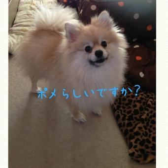 fc2blog_2014021920552933d.jpg