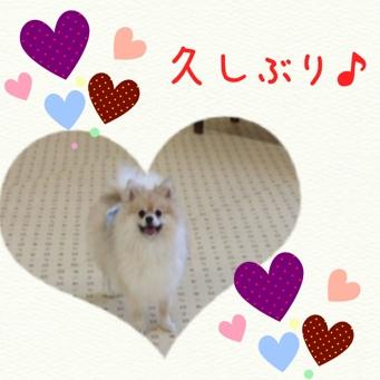 fc2blog_201402242106045be.jpg
