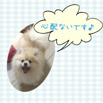 fc2blog_20140228214538093.jpg