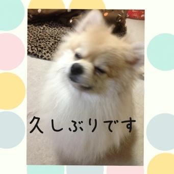 fc2blog_20140307212330f08.jpg