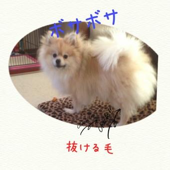 fc2blog_20140310210143e22.jpg