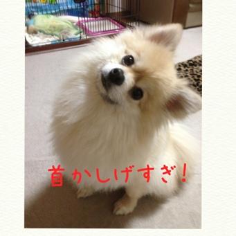 fc2blog_20140408213950acc.jpg