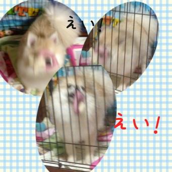 fc2blog_201404102231522a4.jpg