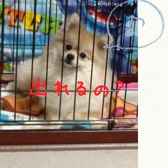 fc2blog_20140428191135b4f.jpg