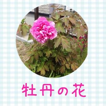 fc2blog_201405031703464b0.jpg