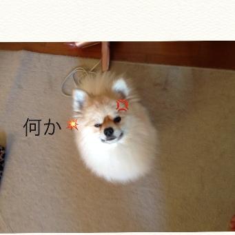 fc2blog_201405072208154aa.jpg