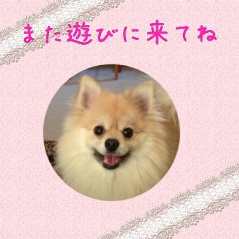 fc2blog_201405092257396c9.jpg