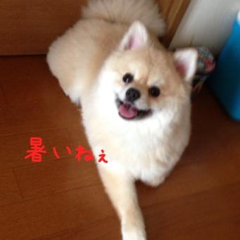 fc2blog_20140529214741bb5.jpg