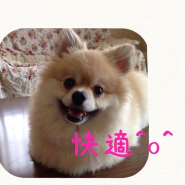 fc2blog_20140617190239a6f.jpg