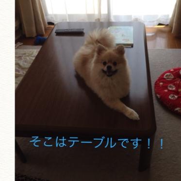 fc2blog_20140617190439826.jpg