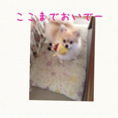 fc2blog_20140619185402a28.jpg