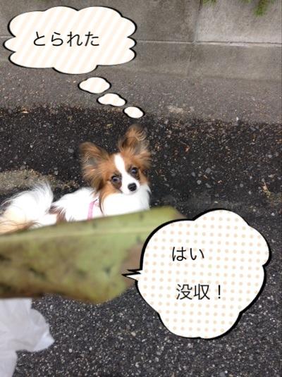 fc2blog_2014062817541904b.jpg