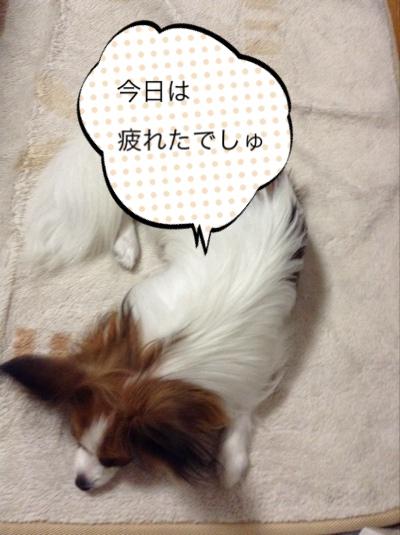 fc2blog_20140628181716a5c.jpg