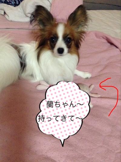 fc2blog_20140630105001c80.jpg