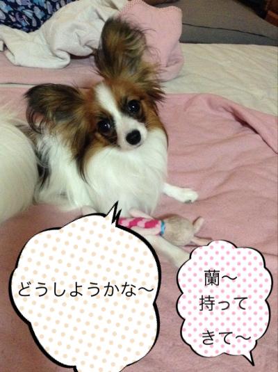 fc2blog_20140630114147fc5.jpg