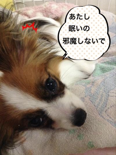 fc2blog_20140716072947b52.jpg