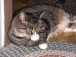 funny_cats22.jpg