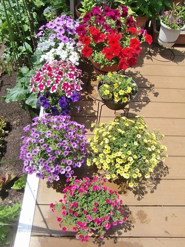 140602flowers