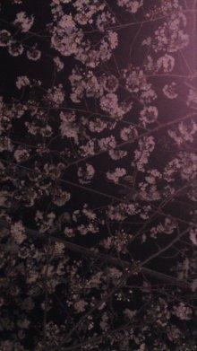 ソプラノ歌手♪佐藤智恵のオフィシャルブログ-100330_1955~01.jpg