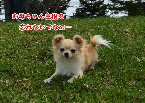 DSC_0533-1.jpg