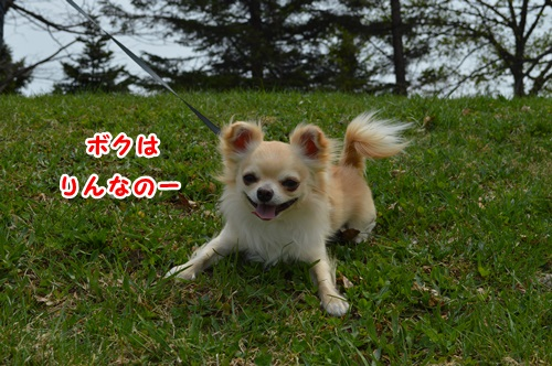 DSC_0537-1.jpg