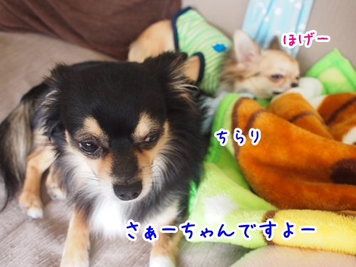 P2080097-01.jpg