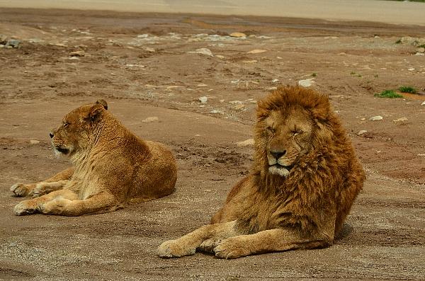 safari8.jpg