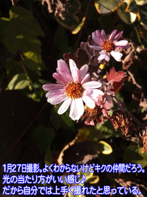 140127_114045.jpg