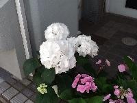 fc2blog_201405291805554ee.jpg