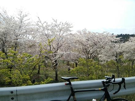 20140412_fujinomiya.jpg