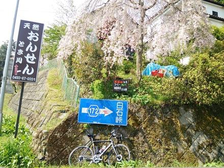 20140419_siraisi1.jpg