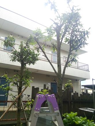 20140711_tree.jpg